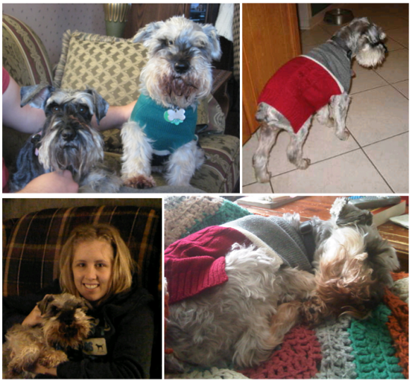 Miniature schnauzer, old pets, dying pets